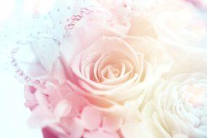 薄ピンクのバラ