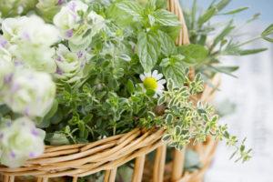 籠の白い花