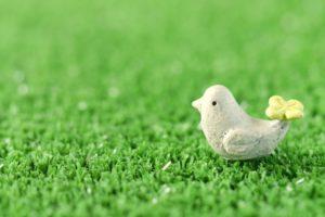 可愛い小鳥